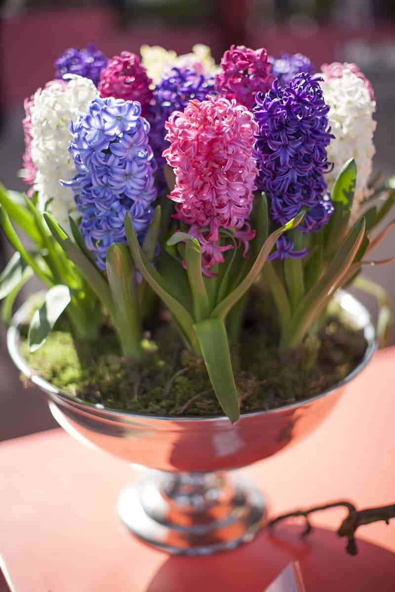 Fotografie bloemen Keukenhof
