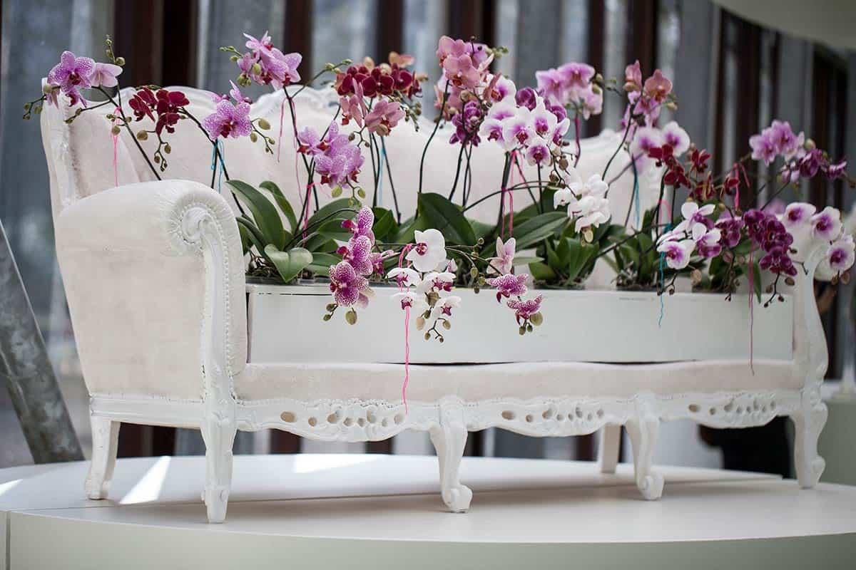 sfeerbeeld keukenhof lisse orchidee orchid photo foto