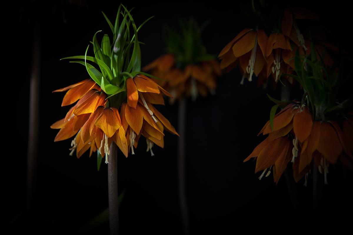bloemen keukenhof Lisse