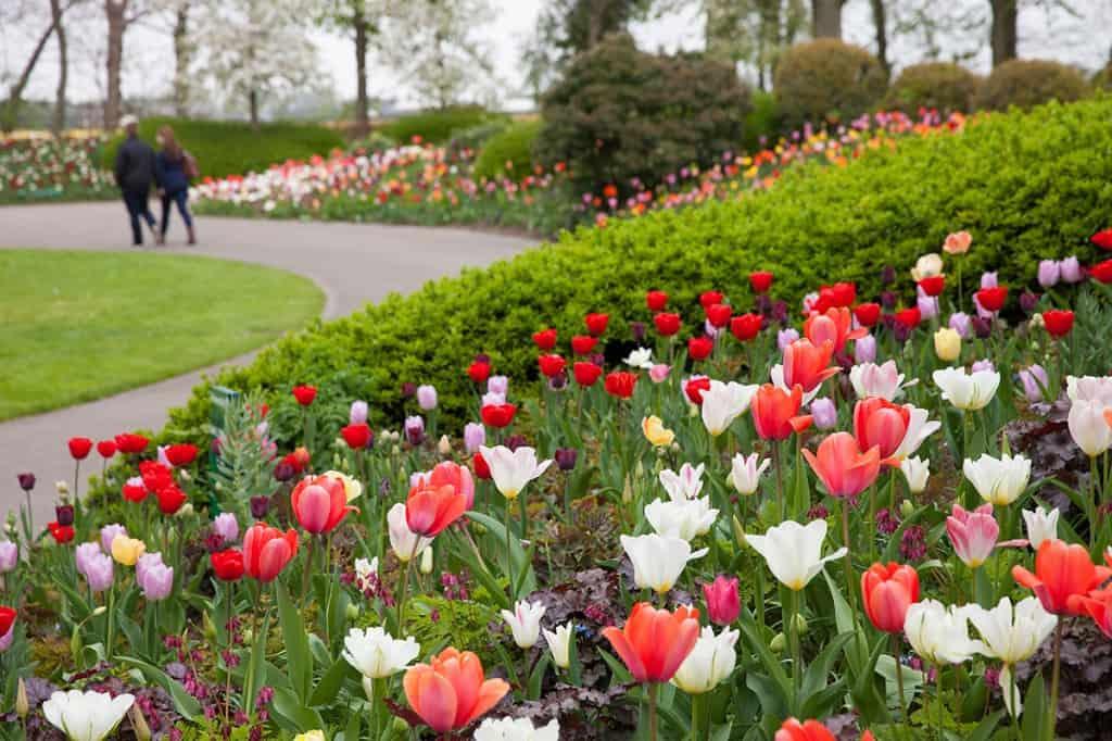 Keukenhof 2014 scenery tulips
