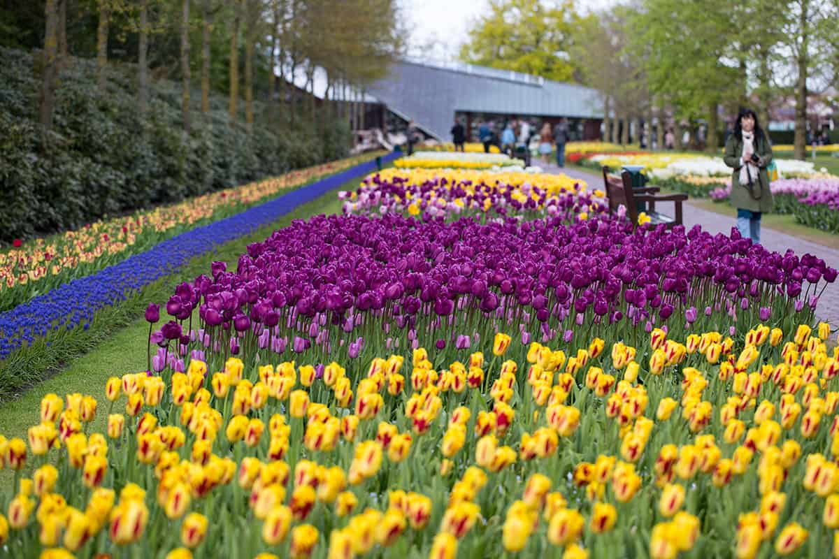 bloemenpark Lisse