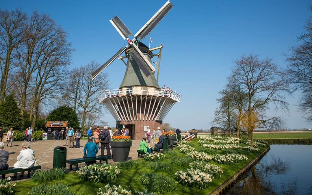 Video impressie 1e week Keukenhof