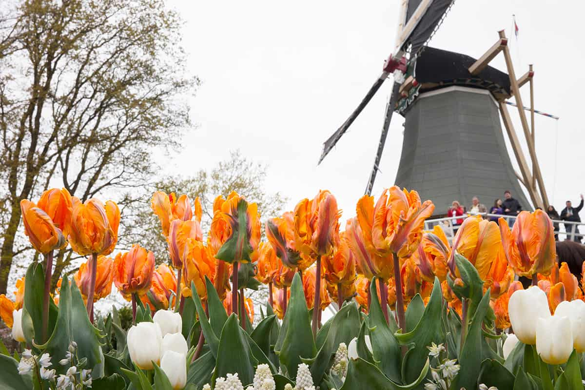 how much time to visit Keukenhof