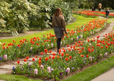 spring dutch garden flower beds