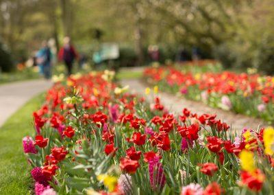 flower beds garden Holland