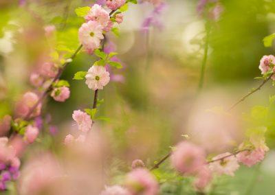 Holland spring gardens