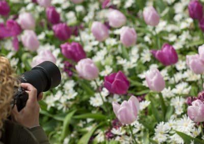 Privé workshop fotograferen tulpen keukenhof