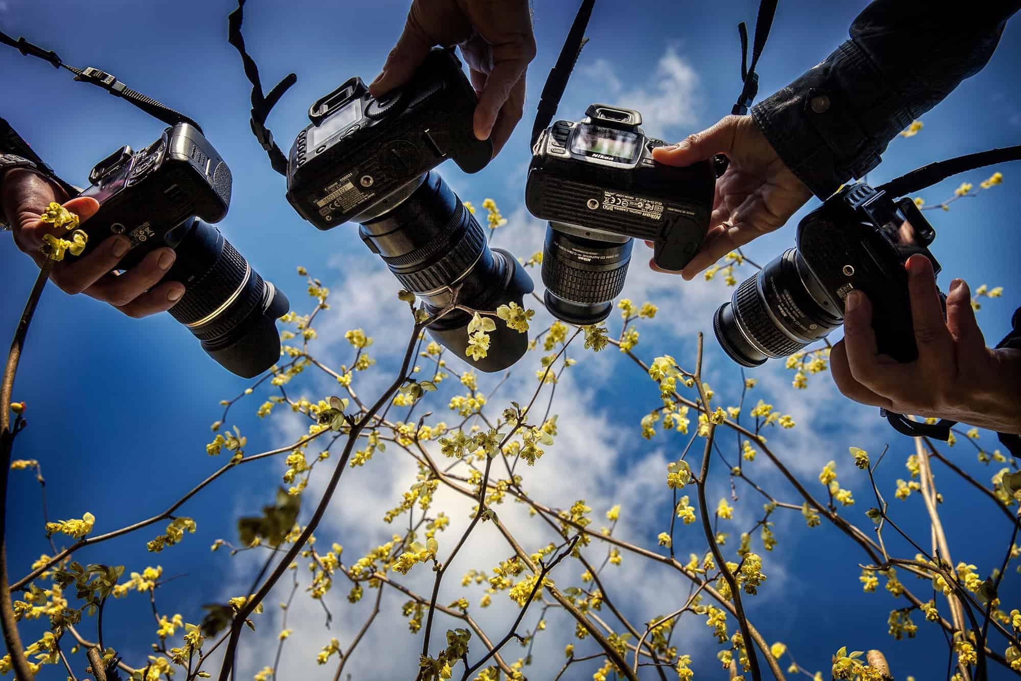 workshop fotografie keukenhof fotocursus tulpen beter fotograferen