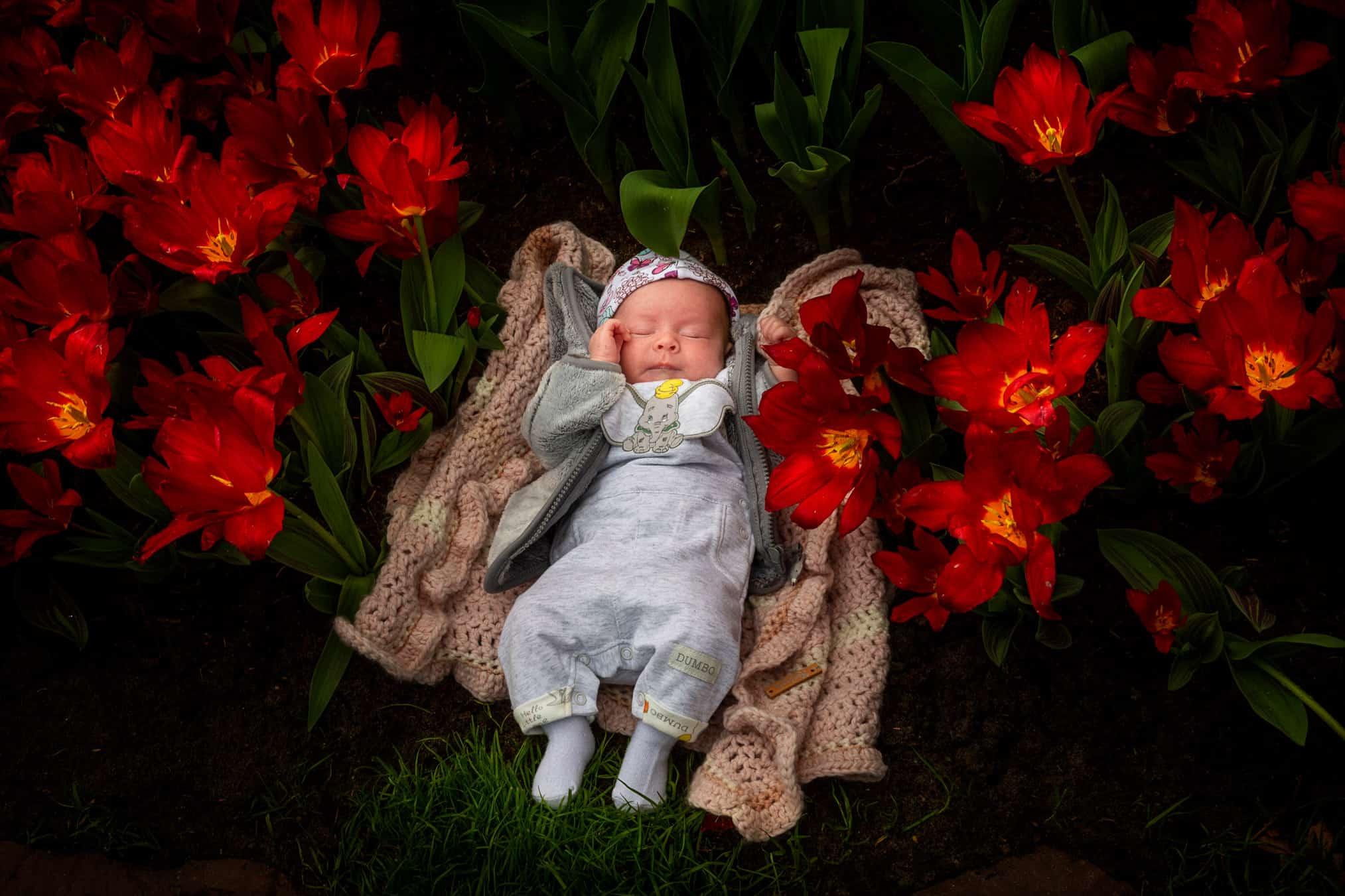 baby foto Keukenhof tulpen