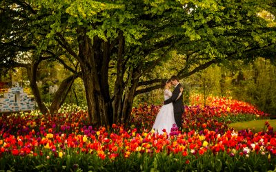 Wedding Photos Keukenhof